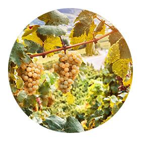 Helia-D Professional Wine Terapy range
