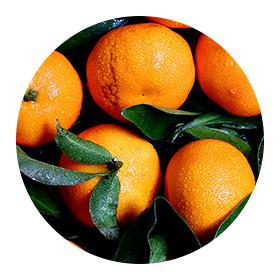 Helia-D Professional Sunflower-Orange range